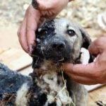 Barış Şengün: Hayvana Şiddet, Mevcut Yasalar İle Meşrulaştırılıyor