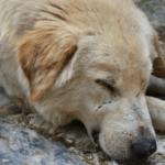 Hayvan Hakları Savunucuları İstanbul Eylemi İçin Çağrı Yapıyor