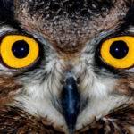 Bir Kuşun Ayak İzi: Bir Yılbaşı Öyküsü – Vladimir Dudintsev