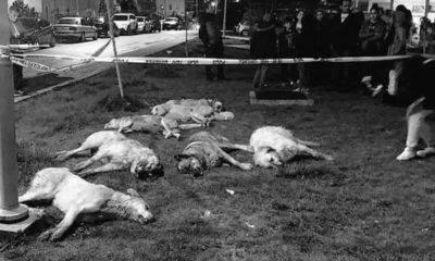 batıkent hayvan katliamı