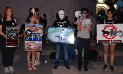 hayvan özgürlüğü aktivistleri atlı fayton