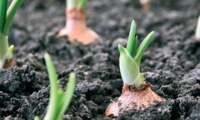 organik ürün biokent