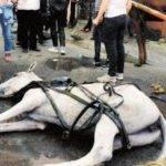 Hayvan Hakları Araştırma Komisyonu: Sembolik Miktarda Fayton Kalacak