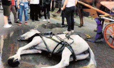 hayvan hakları araştırma komisyonu