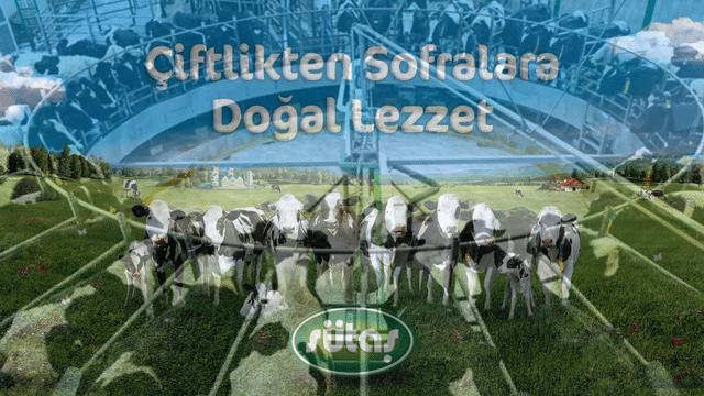 vegan derneği türkiye sütaş şikayet