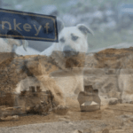 Ilısu Barajı Bitiyor: Suların Dolduracağı Bölgedeki Hayvanlar Ne Olacak?