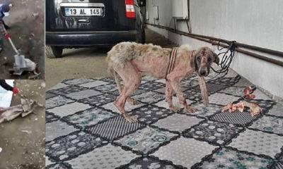 muş bulanık köpek işkence