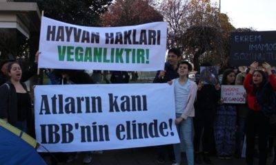 türkiye vegan derneği yaşam nöbeti