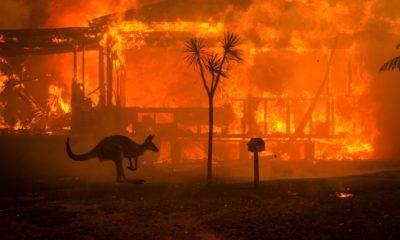 ahmet kemal şenpolat haytap avustralya yangınları