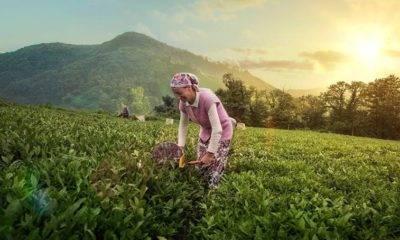 çay üreticileri imza kampanyası