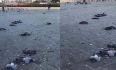 eminönü güvercin katliamı