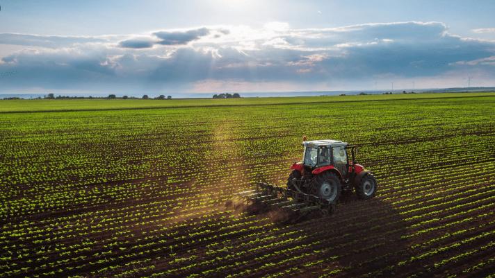 aladddin güncer tohum trakya tarım