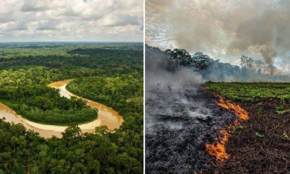 doğal hayatı koruma vakfı