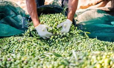 ahmet akın zeytinyağı çevre kirliliği