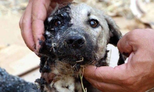hayvan hakları yasası #yasanedenbekletiliyor