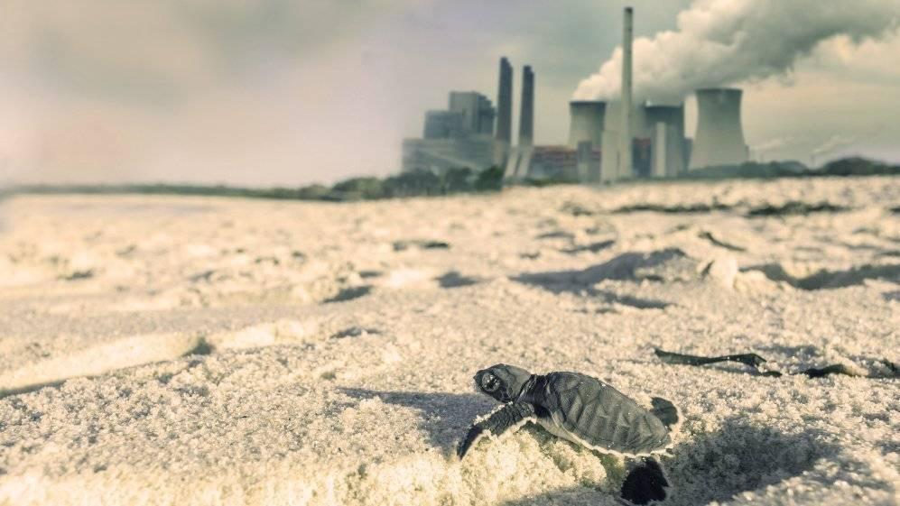 yeşil deniz kaplumbağaları yumurtalık adana