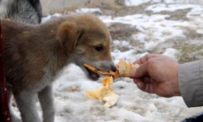 besleme gönüllüleri