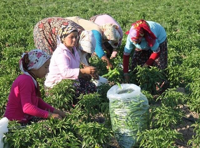 Dünya Kadın Çiftçiler Günü