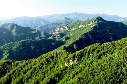 Türkiye Ormanları