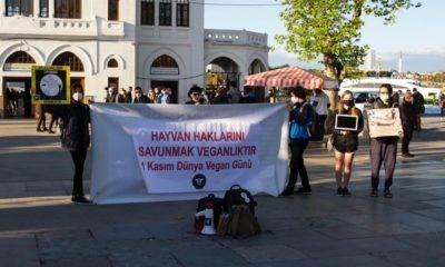 Bağımsız hayvan hakları topluluğu dünya vegan günü