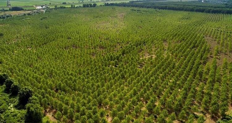 Orman Köylüsü