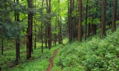 sahipli ormanlar