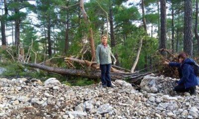 Beycik Köyü Orman Katliamı