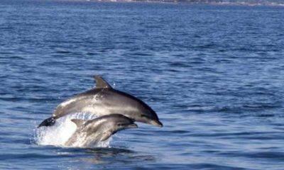 yunus hamsi karadeniz tüdav Türk Deniz Araştırmaları Vakfı