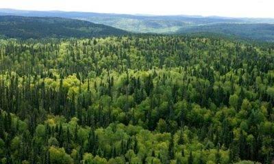 Kuzey Ormanları