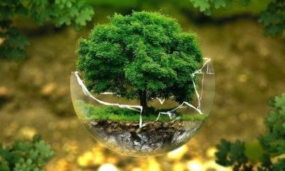 Uluslararası Doğayı Koruma Birliği