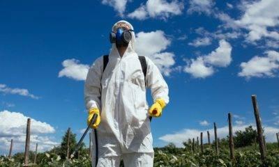 Zehirsiz sofralar buğday derneği pestisit