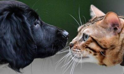 Kedi ve Köpeklerin Kimliklendirilmesi