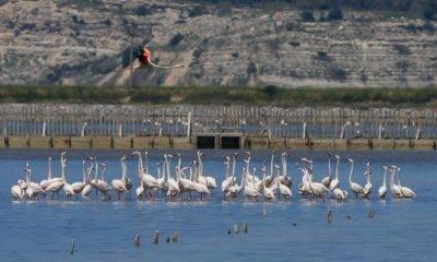 Kuş Cenneti Gediz Deltası'nda Jeotermal Kaynak Arama