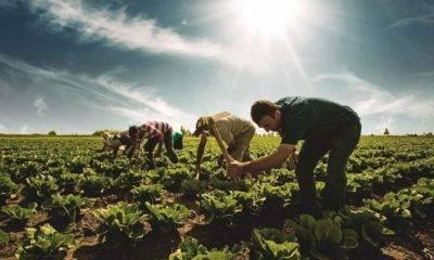 çiftçi-sen uluslararası çiftçi mücadeleleri günü 17 nisan