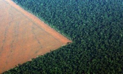 ekolojik bozulma dünya