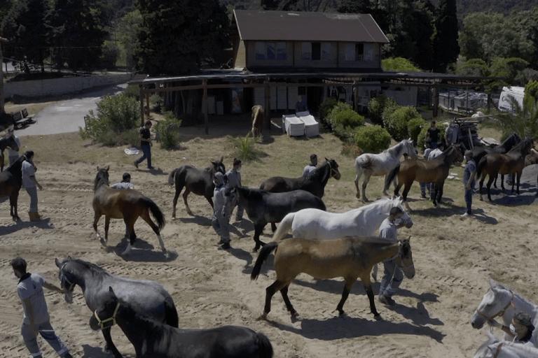 İBB Atları