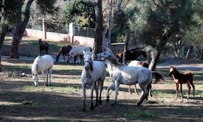 kayıp atlar ibb Dörtyol belediyesi