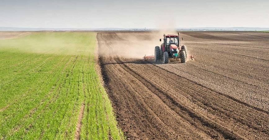 Özcan Purçu tarım alanı