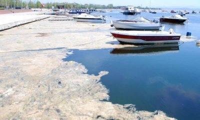 Marmara Denizi'ni Koruma Eylem Planı deniz salyası
