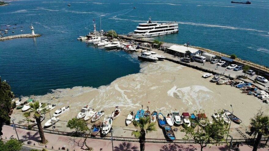 yeşiller partisi deniz salyası Marmara Denizi
