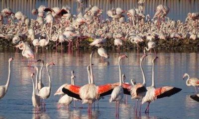 Gediz Deltası Flamingo Doğa Derneği
