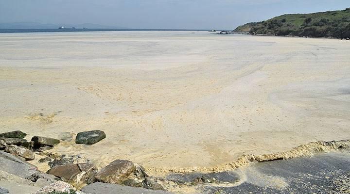 levent artiz marmara deniz salyası müsilaj
