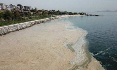 ali şeker müsilaj deniz salyası araştırma önergesi