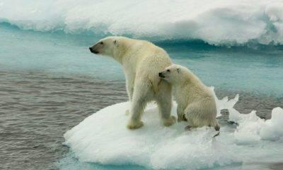 Yale Üniversitesi İklim Değişikliği