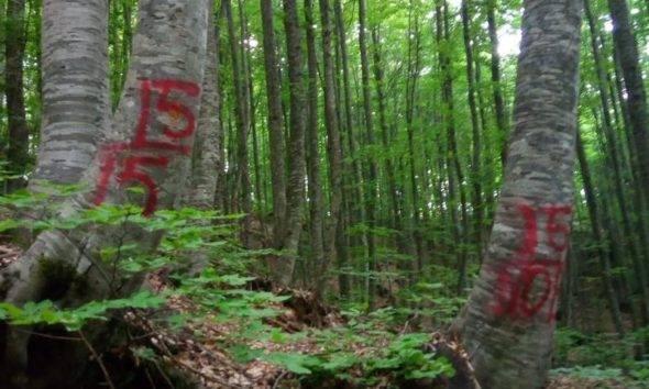 Uludağ ormanları doğader