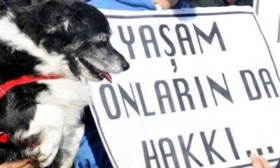 yeni hayvan hakları yasası