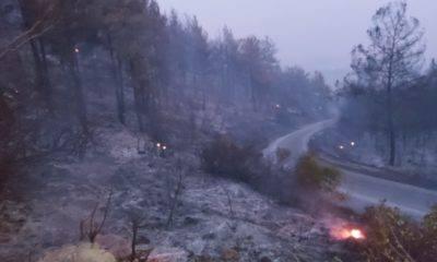 Manavgat Taşağıl Orman Yangını A Platformu