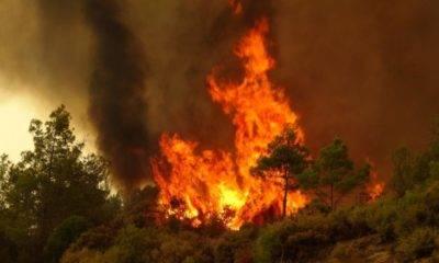 Cerrahpaşa orman yangın rapor