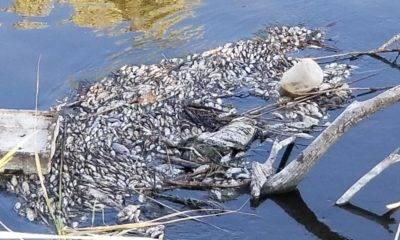 gediz nehri balık ölümleri