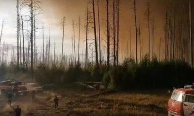 Sibirya rusya orman yangını
